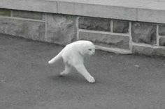 For cat lovers every breed of cat is beautiful and attractive. But white cats are visibly have more good looks and found to have unique characteristic.These white Cat Memes are able to make you laugh. Vicks Vaporub, Funny Cats, Funny Animals, Cute Animals, Dumb Cats, Bad Cats, Cat Memes, Funny Memes, Funny Shit
