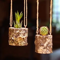 Hanging Planter Indoors Rustic Hanging Succulent Planter Log Planter Cactus Succulent Holder Hanging Plant Pots Gifts for Her Air Plant Gift Log Planter, Succulent Planter Diy, Diy Planters, Hanging Planters, Planter Ideas, Succulent Tree, Succulent Ideas, Succulent Gifts, Hanging Flower Pots
