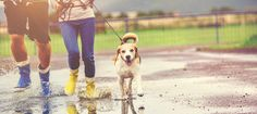 """Are you ready for """"National Walk Your Dog?"""" #dogs #petlovers #petowners #welovedogs #walkyourdogs http://www.walkyourdogweek.com/"""