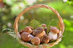 Mushrooms Wicker basket Food