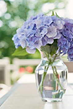 My favorite blue hydrangeas. Cut Flowers, Fresh Flowers, Beautiful Flowers, Flowers Vase, Purple Flowers, Simply Beautiful, Tulips, Hydrangea Bouquet, Blue Hydrangea