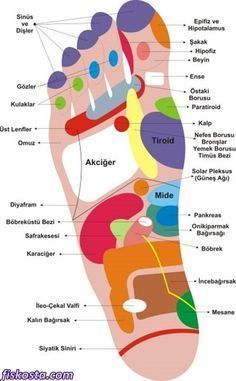 What is foot reflexology? We explain all facts! Health Facts, Health Diet, Health And Wellness, Health Fitness, Reiki, Foot Reflexology, Alternative Treatments, Massage Therapy, Health Remedies