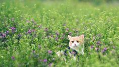 ADORABLE CAT WALLPAPER - (#152907) - HD Wallpapers - [WallpapersInHQ.com]