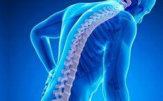 Костно суставная система человека
