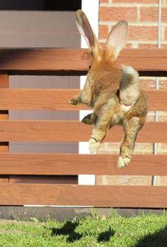 Binky bunny time!
