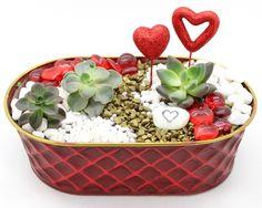 Valentine's Day terrarium from Plant Nite
