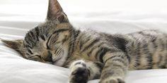 プロが教える「睡眠を向上させる」寝室づくり