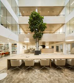 Astonishing Contemporary Office Design In Beige Color : Fresh Potted Tree Placed To Enhance Interior Architecture BarentsKrans Project In High Ceiling Library Interior Concept