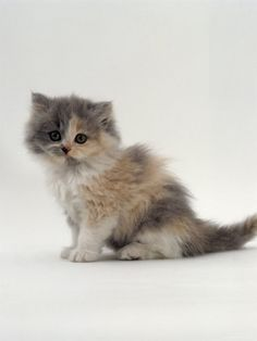I want this kitten to be in my stocking this year :) :) :)