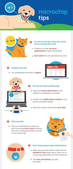 Does your dog or cat need a microchip? Just found a dog or cat and not sure what to do? Here, why you need to get a microchip for your pet!