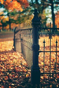 autumncandi:  cozyautumnchills:  fence in the graveyard by katiecawood on Flickr.  Everything autumn|halloween|fall xx