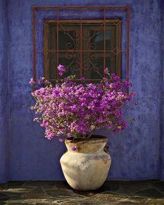 Terrace #gardendesign #colourpop