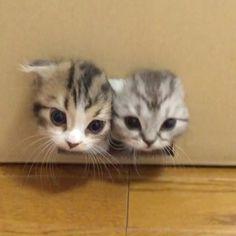 by @matatabi_neko_house ••• best house☺☺☺#catmyboss #cat #cats #catsofinstagram #instacat #catstagram #catlover #catoftheday #catsagram #catlovers #caturday #catlove #catvalentine #catwalk #cats_of_instagram #kitty #kitten #kittens #kittycat #kitties #kittensofinstagram #kittylove #cat_my_boss #pet #pets