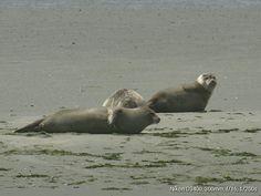 Polar Bear, Animals, Animales, Animaux, Animal, Polar Bears, Animais