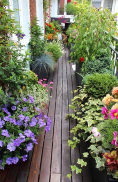 Marzysz o własnym ogródku? Zobacz jakie to proste - Zumi
