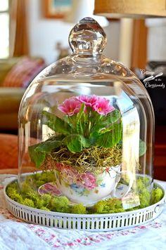 Spring under Glass - teacup moss garden with flowers under cloche