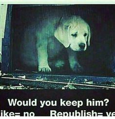 I would keep him!!! | Cute puppies | Pinterest | Animal, Random stuff and Stuffing