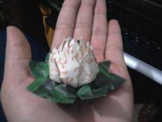 Flor de lótus miniatura.