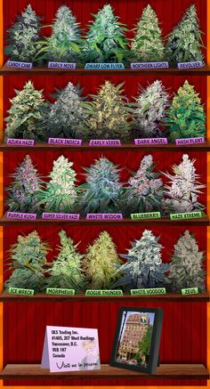 Marijuana Seeds Canada - Buy Cannabis Seeds For Sale - Crop King