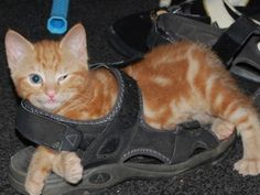 This kitten trying to make a fashun statement. | 21 Of The Most Awkward Kittens In The World