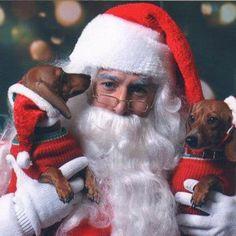 Santa's cute pals - photo via I love Dachshunds fb page I Love Dogs, Puppy Love, Cute Dogs, Cute Puppies, Mini Dachshund, Dachshund Puppies, Christmas Animals, Christmas Dog, Christmas Dachshund