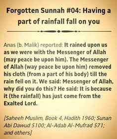 Take your blessings from rain. May Allah bless you all❤️. < Does this mean I can play in the rain? Mom: Get inside at once. (screaming and running away) Islam Religion, True Religion, Alhamdulillah, Hadith, Fever Quotes, Saw Quotes, What Is Islam, Prophet Muhammad Quotes, All About Islam