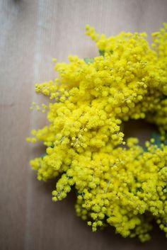 Fluffy yellow wreath of acacia flowers (wattle) Fresh Flowers, Yellow Flowers, Beautiful Flowers, Pastel Yellow, Le Mimosa, Shades Of Yellow, Mellow Yellow, Daffodils, Organic Gardening