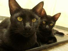 Meu filhinho o Cookie e meu netinho o Homero. São como chamamos aqui em casa: os gêmeos! <3<3  **Izabel Cristina**