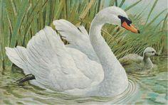 Белый лебедь - Схема вышивки крестом