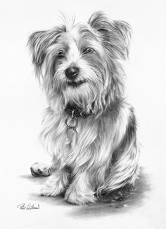 what a darling pencil drawing... Peter Williams: Little Sam