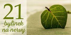 Potřebujete na chvíli vypnout? Uklidnit se? Zbavit se stresu? Využijte sílu přírody a okuste bylinky na nervy! Medicinal Herbs, Korn, Amazing Gardens, Smoothie, Watermelon, Detox, Plant Leaves, Lime, Survival