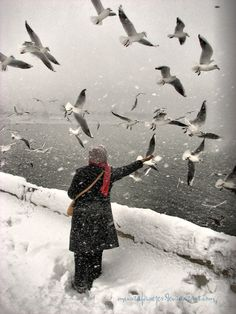 snow and birds by Mustafasezar. (Kucukcekmece/Istanbul