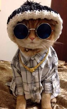 Cat dressed up, funny cats, funny animals, animals and pets, silly cats Cute Funny Animals, Cute Baby Animals, Kittens In Costumes, Kittens Cutest, Cats And Kittens, Cute Cat Wallpaper, Silly Cats, Funny Cats, Cat Aesthetic