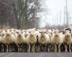 羊飼いの楽しみ01