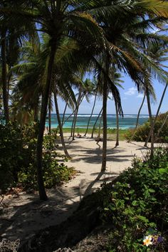 I really needed. Paradise Pictures, French West Indies, Caribbean Culture, Paradise On Earth, Tropical Vibes, Central America, Landscape Photos, Beautiful Beaches, Scenery