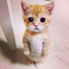 #likeback#cuteanimals#pics#beautifulpics#animalsimag