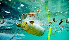 New Invention The 'Seabin' Could Save Our Oceans #News #Pollution #Water #Technology #Invention #WaterPollution