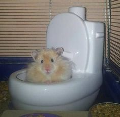 Hamster - lovely picture