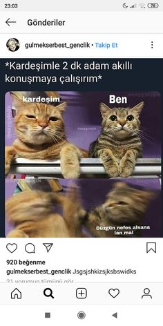Aa aynı biz adads Comedy Pictures, Funny Pictures, Funny Speeches, Best Memes Ever, Funny Phone Wallpaper, Funny Times, Stupid Memes, Funny Comics, Really Funny