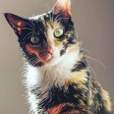 #pigalle #cats #cat #loveofmylife #nice #eyes #instakitty #instacat #instadaily #catsofinstagram #catstagram