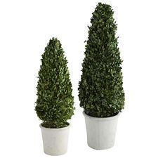 Preserved Boxwood Cone Topiaries