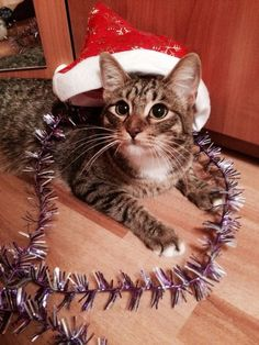 Well, when already the new year? - http://unusual-cats.com/well-when-already-the-new-year/