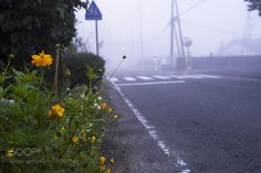 In the morning mist by fzq0801