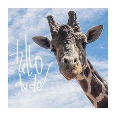 Eventually loves giraffes