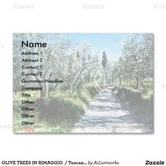 OLIVE TREES IN RIMAGGIO  / Tuscany Landscape Large Business Cards (Pack Of 100)