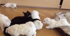 Click to see how kitty is coping with being a nanny!