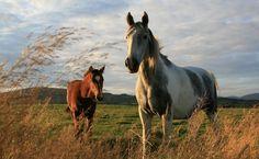 horse desktop backgrounds wallpaper, 699 kB - Hazel Murphy