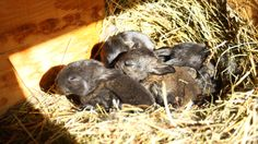 Bunnies are Growing - http://rollinghedgehog.com/bunnies-are-growing/