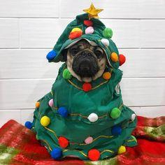 doug the pug christmas Cute Pugs, Cute Puppies, Pug Wallpaper, Teacup Pug, Pug Christmas, Xmas, Doug The Pug, Sweet Dogs, Baby Pugs