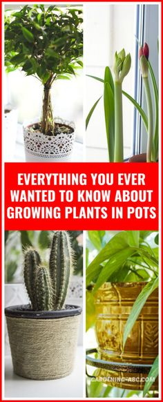 What is Container Gardening? Container Gardening simply means growing plants in containers or pots. Today, when the limitation of time and space is everyone's utmost concern, this seems to make a lot of sense. Especially, if you live in an apartment, Container gardening is probably the best way to do... The post Container Gardening: A great Motivator appeared first on Gardening ABC. Container Herb Garden, Container Gardening Vegetables, Garden Pots, Garden Ideas, Planter Garden, Container Flowers, Garden Spaces, Growing Vegetables, Growing Plants